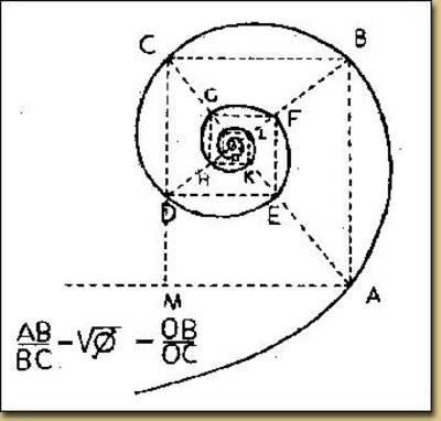 "The Fibonacci spiral is considered a logarithmic spiral, which are found everywhere in nature. Jakob Bernouli, a mathematician from a great family of brilliant people, called the logarithmic spiral spira mirabilis, or ""the Miraculous Spiral,"" so called because the size increases but its shape is unaltered with each successive curve. This kind of spiral shows up in shells, in hurricanes, in flowers and even in the human body!"