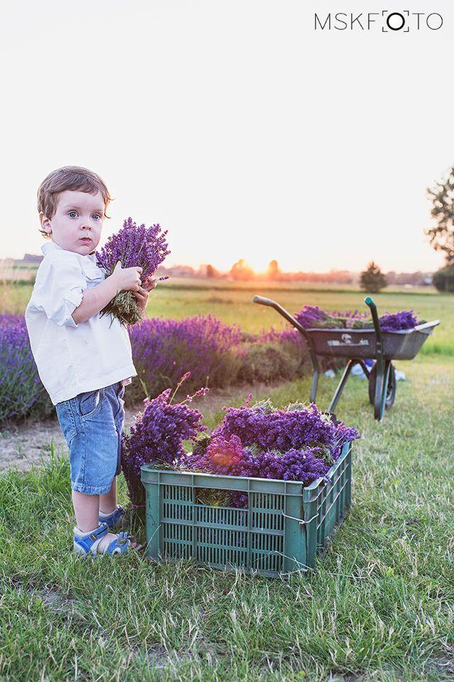 lavender, boy
