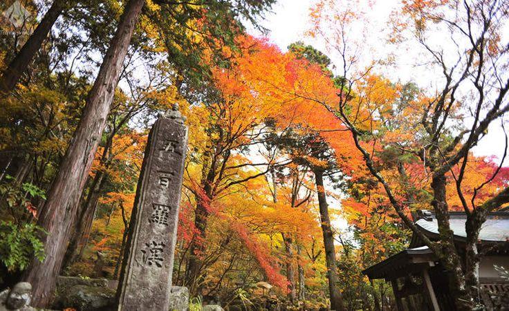 秋の箱根で楽しむ色彩豊かな紅葉と極上グルメ
