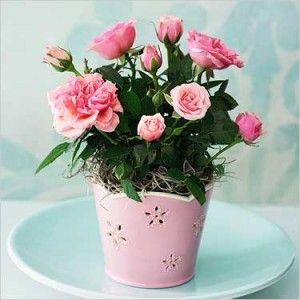 Miniature rose pot