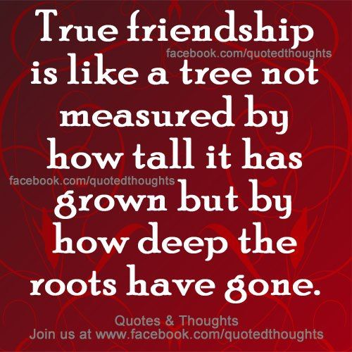 Quotes On Wah A True Friend Is: True Friendship Is Like A Tree ....