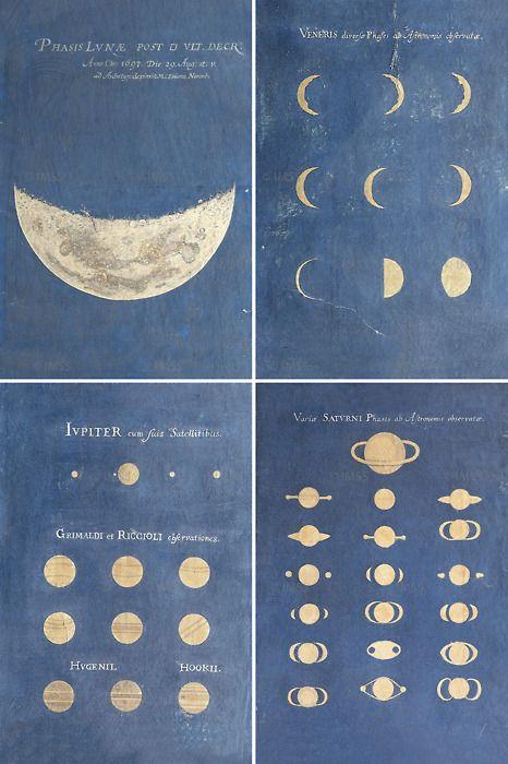 sorawit:    elizabeth—frances:    Maria Eimmart - 17th century illustrations