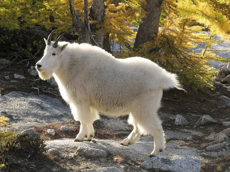 животные северной америки фото с названиями ниже поможет все