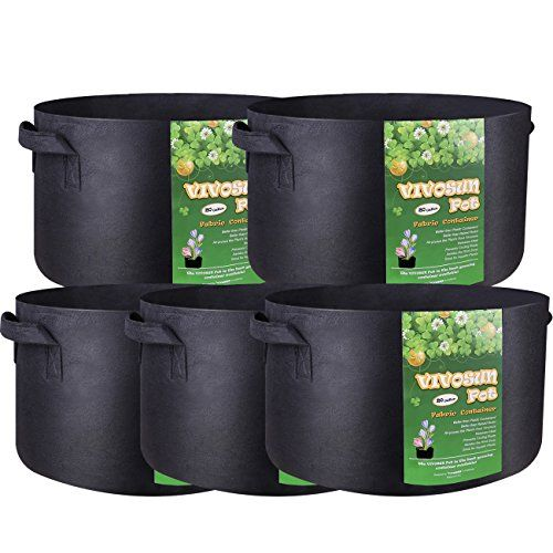 Easy Vegetables To Grow In Pots Great For Small Spaces 640 x 480