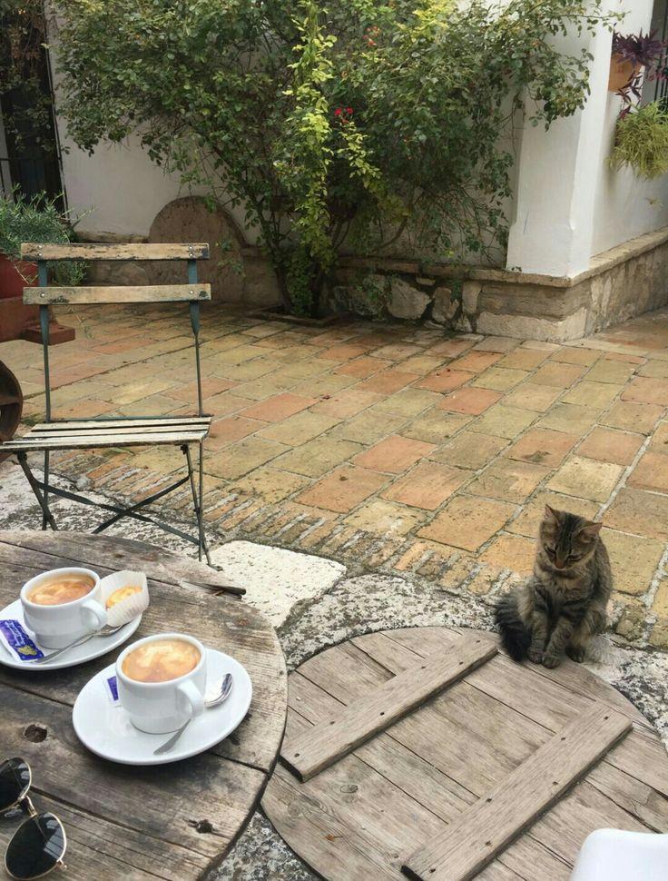 Café, gatos y amor. Que más se puede pedir. Places of Andalusia. Hacienda Minerva. Zuheros, Córdoba. #cat #coffee #goodvibes