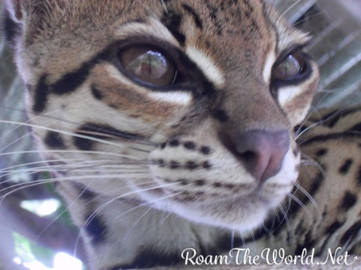 Ever thought about going to the Amazon Jungle? http://roamtheworld.net/lead-adventures/