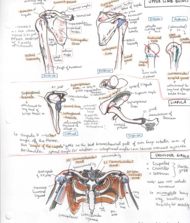 656 besten EMT/Paramedic Studies Bilder auf Pinterest | Medizin ...