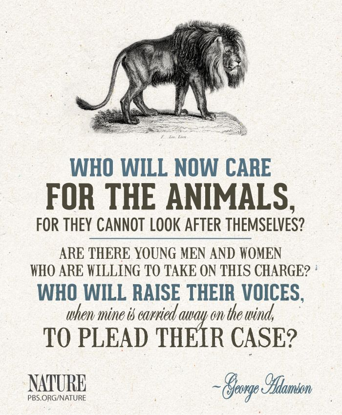 "A quote from wildlife conservationist and author George Adamson. Watch ""Elsa's Legacy"" online: http://to.pbs.org/RLX5sq"