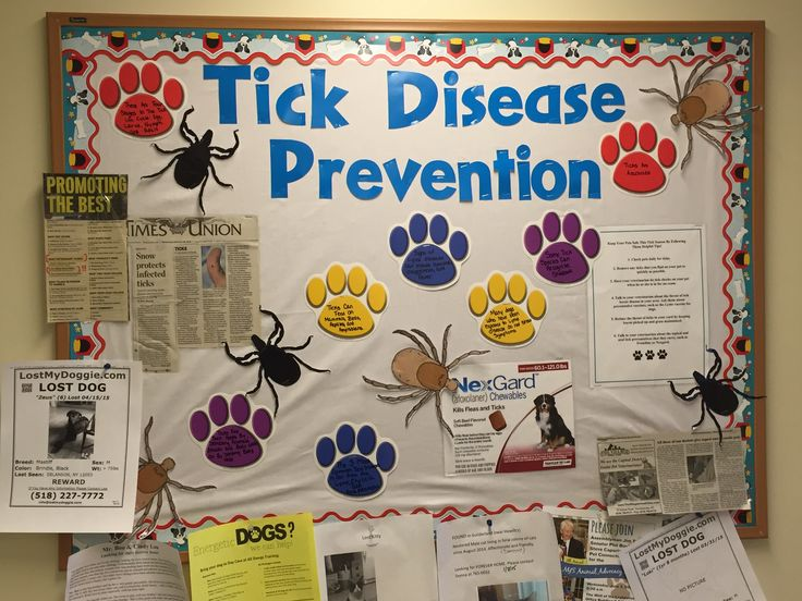 Tick prevention awareness! Ah, living in the great north east brings us plenty of challenges, including dealing with the dreaded deer tick (and dog tick, and black legged tick and, well you get it). I found free printable tick bodies online, cut them out and laminated them. Next, I found a photo of the product that we most strongly encourage owners to use for tick prevention. I also printed up a little sheet on tick detection tips. The paw prints on the board all have facts about ticks too…