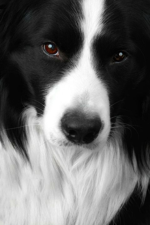 I don't know what kind of dog this is but it is so beautiful!  It is a beautiful boarder collie. I have one named Marti who is awesome