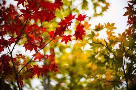 """Résultat de recherche d'images pour """"arbre automne"""""""