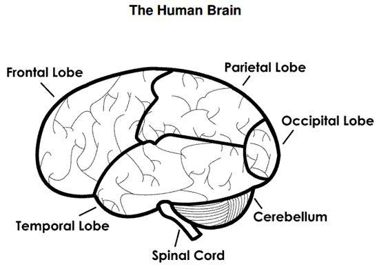 easy brain diagram xtm winch wiring snu vipie de the human worksheet psychotherapy pinterest rh com to draw