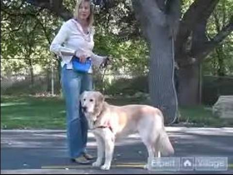 How to Train a Golden Retriever : How to Teach Your Golden Retriever to Lie Down