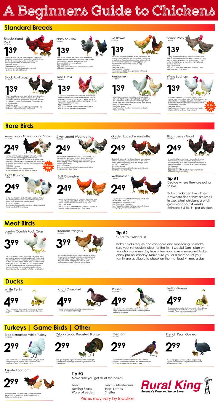A few facts about each breed we carry. You can special order any of these birds almost year round at our stores.
