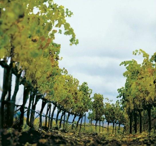 Wine Country Dreamin': Napa or Sonoma?