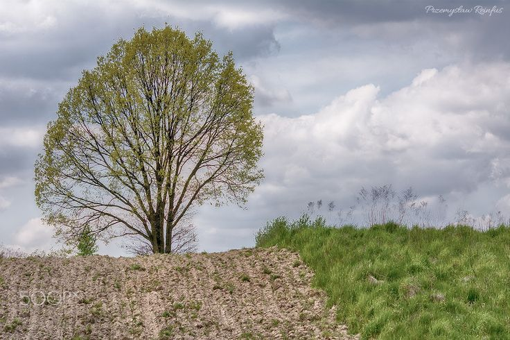 Lonely tree - null