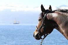 Lausanne 2014 Gallery - LONGINES GLOBAL CHAMPIONS TOUR - Bertram Allen's Belmonde enjoys the incredible view of Lake Geneva