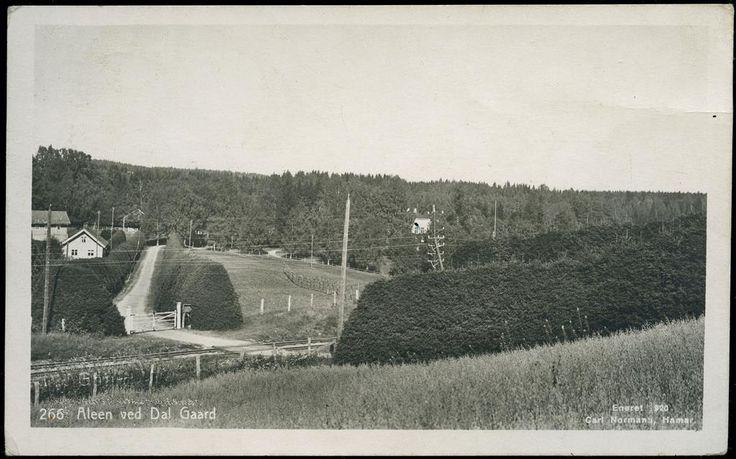 Akershus Eidsvoll kommune DAL GAARD 1920. Alléen utg Normann