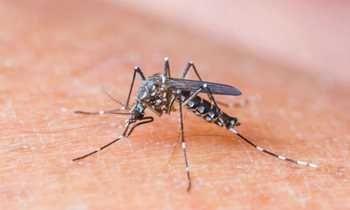 Zika pode provocar alteração neurológica até a idade escolar, acreditam médicos