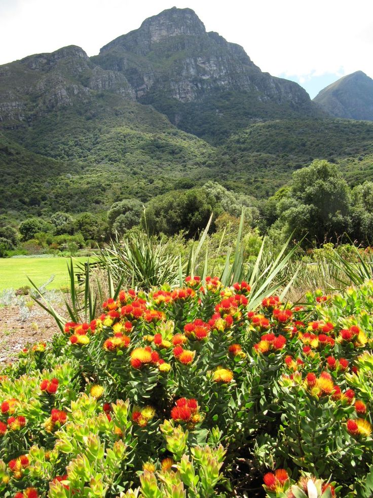 Kirstenbosch Botanical Garden, Cape Town, South Africa