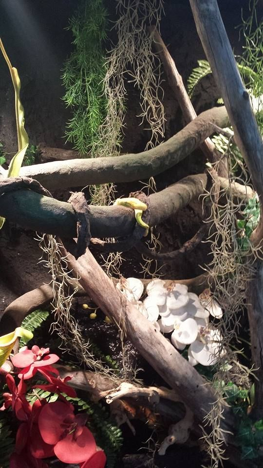 H P Reptiles 23 best Green T...