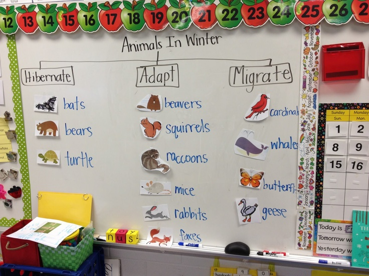 Learning about what animals do during the winter is an important part of teaching the seasons to students. This is a fun way to guide practice and teach the three things different kinds of animals do during the cold weather.