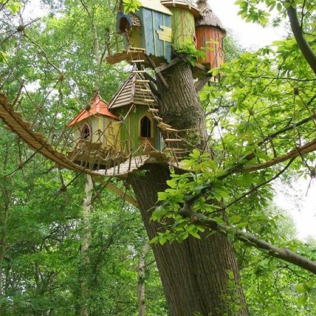 yes please: Birdhouses, Norfolk England, Fairies House, Treehouse, Birds House, Trees House, Bridges, Photo, Kid