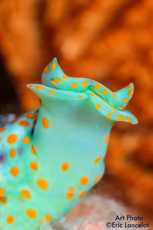 beautifully colored nudibranch