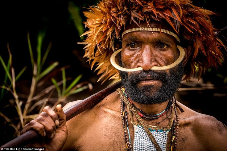 A Dani tribe warrior with weapons and huge rings through his nose in Western New Guinea, Indonesia, August 2016