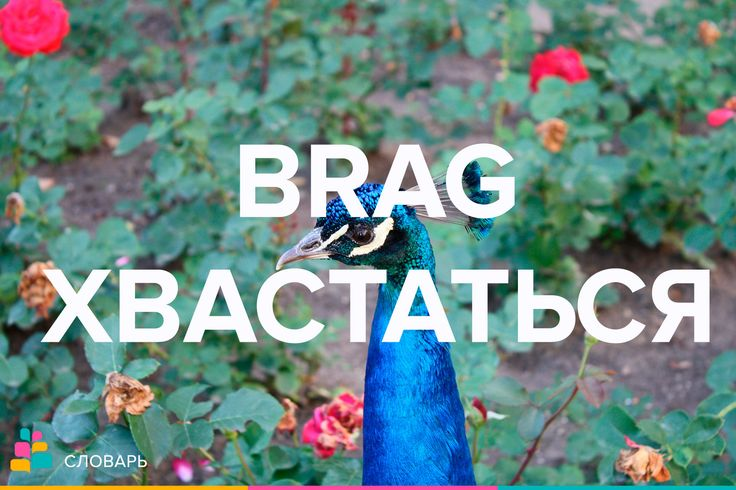 Brag |bræɡ| — похвастать, хвастаться, хвастовство, хвастун  Brag about courage — хвастаться своей храбростью  Begin to brag — захвастаться  Brag a little — прихвастнуть  Brag wildly / brag away — расхвастаться  Примеры:  I do hate the way Bill brags about his new car / Меня бесит то, как Билл хвастается своим новым автомобилем.  After winning the race, she couldn't stop bragging / После своей победы в гонке, она никак не могла перестать хвастаться.    #treewords