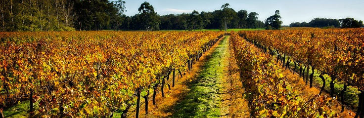 The Margaret River region is home to more than 120 wineries