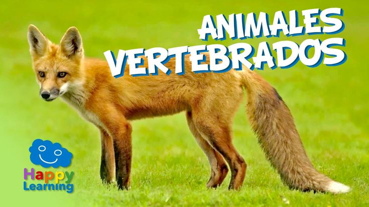 Animales Vertebrados | Videos Educativos para Niños