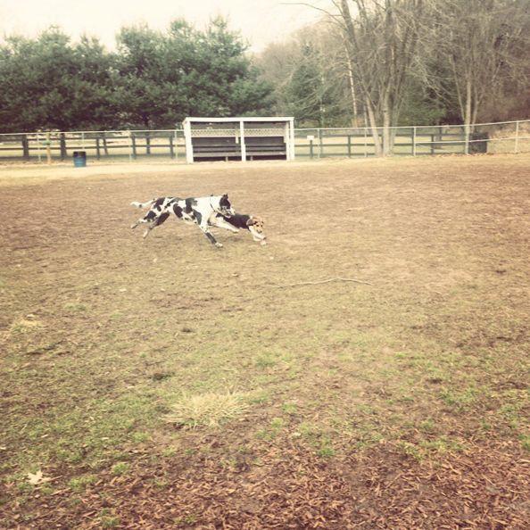 Off-leash fun at Jackson Dog Park! - Vienna, WV - Angus Off-Leash #dogs #puppies #cutedogs #dogparks #vienna #westvirginia #angusoffleash