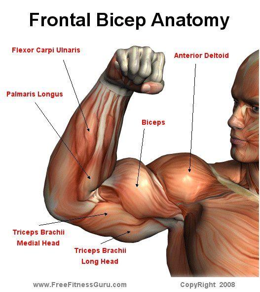 Медленный рост мышц рук