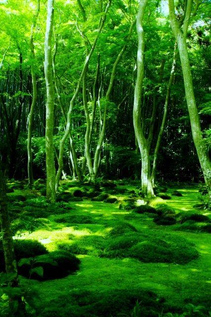 Carpet of moss at Giouji Temple, Kyoto, Japan
