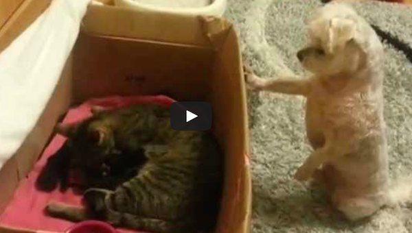 Chien voit chatons nouveau-nés pour la première fois (VIDEO)