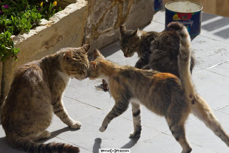 Caturday Valentine's  at Blue Grotto, Malta