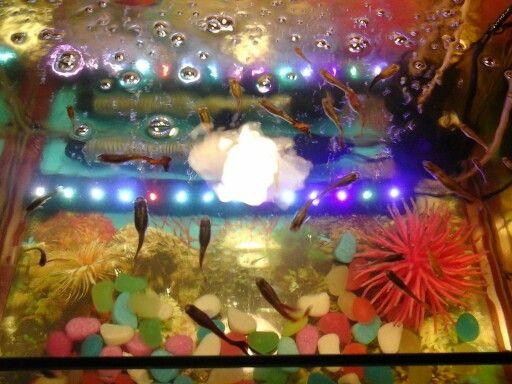 Мой домашний аквариум