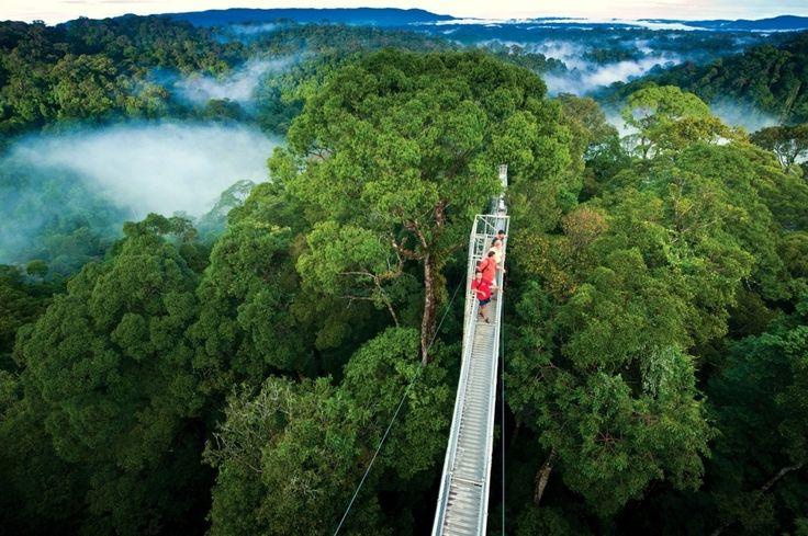 Borneo Rainforest Canopy Walkway