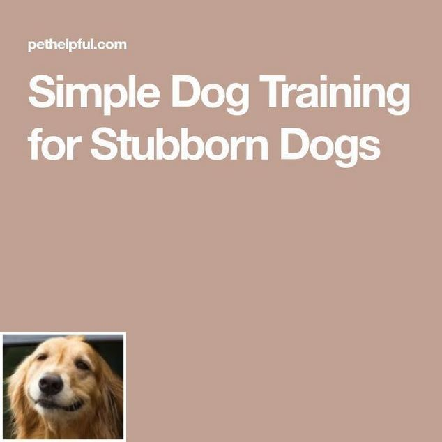Stop Dog Jumping And How To Train A Puppy To Pee Outside Check
