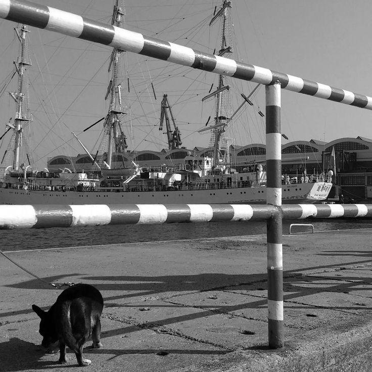 Zdjęcie numer 14 w galerii - Morskie oblicze Gdyni. Ależ niesamowite zdjęcia!