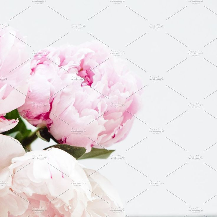 Stock Photo   Pink Peony Image by TwigyPosts on @creativemarket. Purchase for $6. #ad