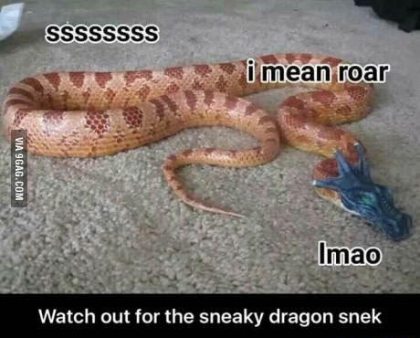 Any fellow sneks?