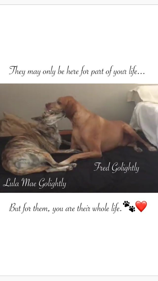 #RDL #Sunday #Message ❤️ #DogLove #DogsAreFamily #RedDogLeather #Family #Business #Handmade #High #Quality #Leather #Gear #For #You #And #Your #Dog #OudoorUse *Join us on; #Etsy, #FB, #Twitter #Instagram