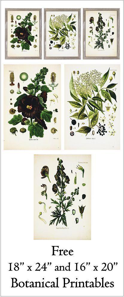 "Free 18"" x 24"" and 16"" x 20"" Botanical Printables- Series 1. http://www.simplymadebyrebecca.wordpress.com"
