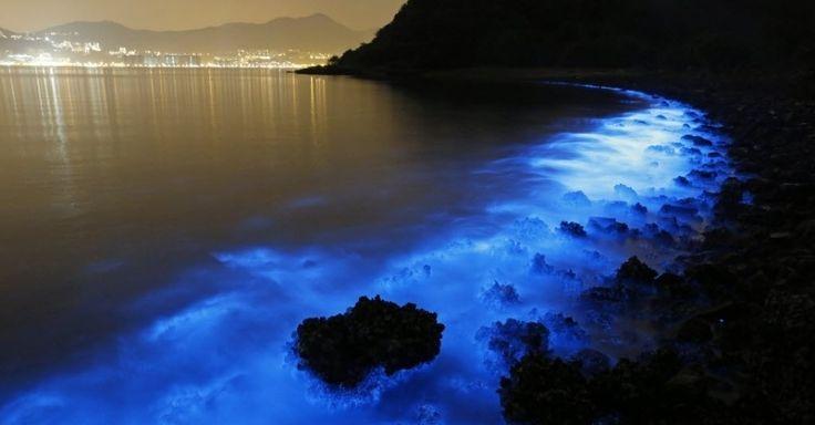 Brilho azulado de algas Noctiluca scintillans é evidenciado em captura com efeito de longa exposição na costa de Hong Kong. Esta espécie de alga se reproduz em excesso quando está em contato com grande quantidade de lixo ou matéria orgânica, o que ameaça a pesca e a vida marinha local, segundo a oceanógrafa Samantha Joye, da Universidade da Geórgia. A alga não produz toxinas como outros organismos semelhantes. Mas, por exercer um papel tanto de presa quanto de predador, pode gerar um…