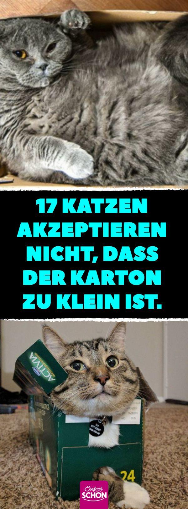 17 Katzen akzeptieren nicht, dass der Karton zu klein ist. #katzen #kartons # bo …  – Katzen