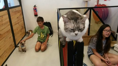 #Tumblr laceymod:  From The Cat Cafe in Singapore!   Travel   Esplanade...