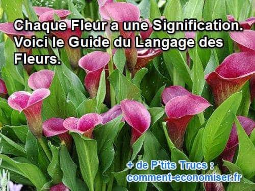 best 20+ signification fleurs ideas on pinterest | signification