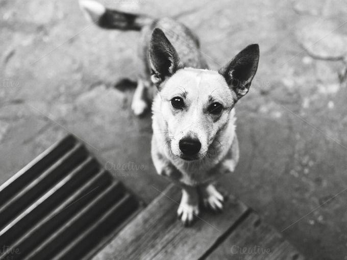 Cute doggie by Olga_Z on Creative Market